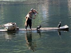 Fisherman with his cormorants