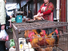 Chickens and ducks share the same fate at the market where the Chinese like their food fresh
