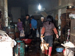 Blood drips on the floor as the workers wear goulashes and carry the freshly slaughtered ducks by their feet