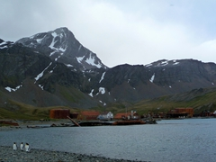 King penguins standing on the shore line of Grytviken Whaling station in Cumberland Bay