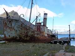 A King Penguin saunters by the rusting ruins of the Petrel, the last whale catcher to see service at Grytviken