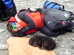 Doctor Ross Hofmeyr curls into position next to a blissful fur seal pup; Fortuna Bay