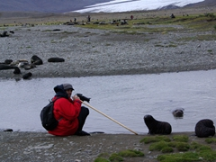 Robby uses a long pole to keep curious fur seals at arms length; Fortuna Bay