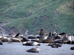 Hundred of fur seals at Right Whale Bay. You can imagine we kept our distance!
