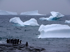 Adelie penguins about to enter Iceberg Bay
