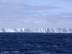 Its hard to gain perspective from a simple photograph but this tabular iceberg is over one mile long, and was definitely the biggest one we saw the entire trip; Scotia Sea