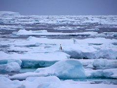 A lone emperor penguin on an ice floe in the middle of the Scotia Sea