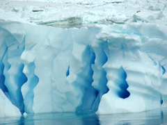 The beautiful shades and shapes of Paulet Island's icebergs made zodiac cruising a joy