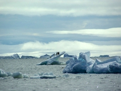 Penguins trying to stay afloat on an unstable iceberg bit