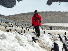 Walking on Paulet Island can be an exercise in patience...the adelie penguins have the right of way so we took our time walking from one side of the island to the other