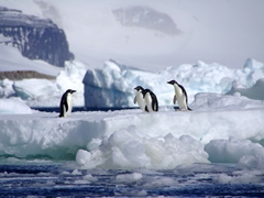 Adelie penguins on a gorgeous iceberg near Paulet Island