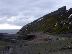 Nearly half a million chin strap penguins have made Bailey Head their home! Here is the view on our hike from Bailey Head to Whaler's Bay