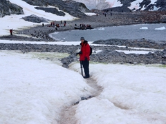 Robby walking along a penguin path on Cuverville Island