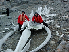 Posing beside a reconstructed whale bone skeleton, made up of various types of whales bones left from whaling days of the early 1900's; Wiencke Island