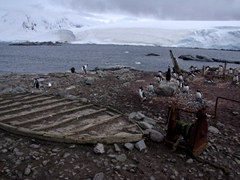 Port Lockroy's remains of a wooden boat, and a hand crank, marking the original landing zone for the island. Gentoo penguins have adopted this area as their home