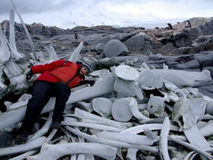 A sad remnant of the excessive wastes of whaling. Robby lies next to some massive whale bones on the island of Wiencke
