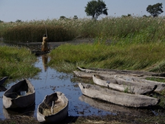 A poler takes her mokoro out to get fresh drinking water; Okavango, Botswana