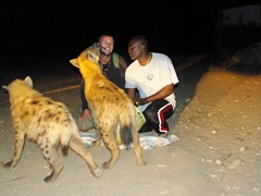 Robby feeds hungry hyenas at the age old nightly tradition just outside Harar's city walls; Ethiopia