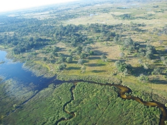 Having an experienced poler to help you navigate the labyrinth waterways of the Okavango Delta is a must