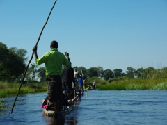 Mokoros and their polers gliding blissfully through the Okavango Delta