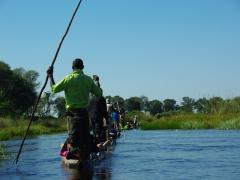 Mokoros and their polers gliding blissfully through the Okavango Delta
