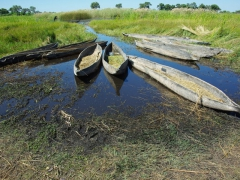 Mokoros are dugout canoes made from fiberglass or more traditionally from ebony or sausage tree logs