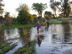 Wading across a river; Okavango Delta (we later saw crocodiles and hippos in this same body of water!)