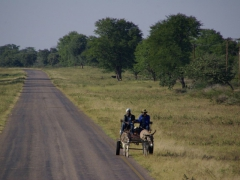 Donkey cart transport on a main Botswana road