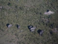 Elephants are quite plentiful in the Okavango Delta