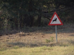 "A ""caution, springbok jumping"" sign is commonplace throughout Botswana"