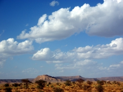 A beautiful rocky plateau amidst the surprising greenery of the Sahara; Tiguelguemine