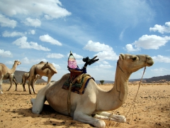 Camel drivers prepare their beasts with plenty of water and rest before embarking on a trek with tourists