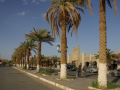 Date palms line the streets and provide much needed shade in the city of Adrar