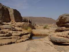 Small guelta along a dried oued (river bed); south of In Salah