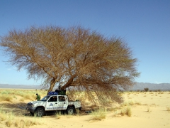 Stopping for a lunch break under a little shade near Adrar
