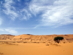 A lone tree stands out in the middle of the sand dunes; near Arak