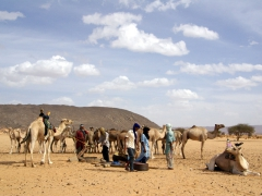 Salim and Abdsahlem stop and chat with local Tuareg camel drivers, giving us the perfect photo opportunity