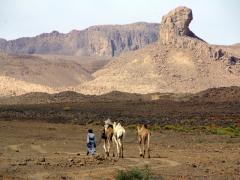A camel driver walks with his camels near Assekrem