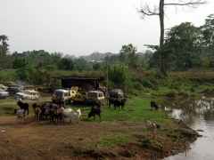Kumba riverbank scene