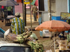 A man sits on top of his sugar cane load; Buéa market