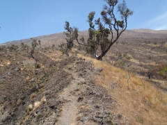 The never ending trail to the summit of Mt Cameroon
