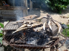 Freshly grilled fish; Kribi beach shack restaurant