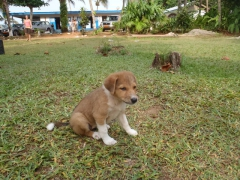 The cute puppy we wanted to adopt at Auberge Tara Plage; Kribi