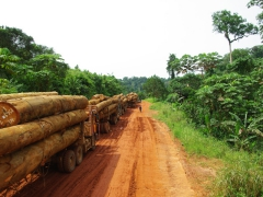 You would think that with the sheer amount of logging trucks we saw on the roads of Congo that the country would have depleted its natural resources. However, we still found vast sections of virgin, untouched forest