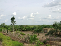 Typical fence style that designates this Congolese owner's property; Doussala