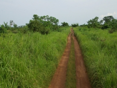 Picturesque (and rugged) road leading towards Congo's interior