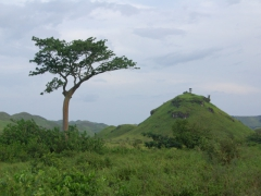 Congo is such a green, fertile country