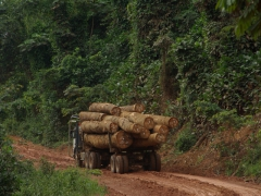 A common sight in Congo
