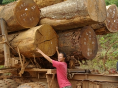 Becky is dwarfed by the massive logs on this truck
