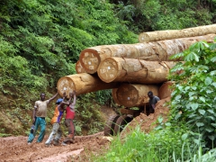 Truck drivers giving a half hearted attempt to free their logging truck from the mud